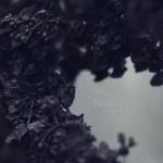 Nebelung-palingenesis